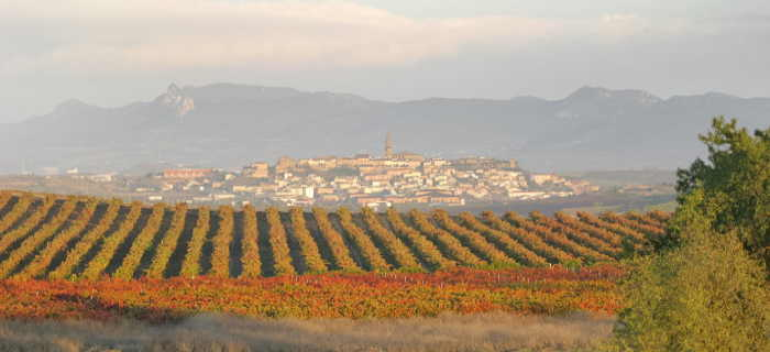Rioja wine tour Vineyards- Rioja Tourism