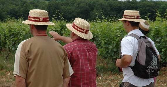Beaune Wine Holiday - Credits Cote-d'Or Tourisme R Krebel Vineyards Tour