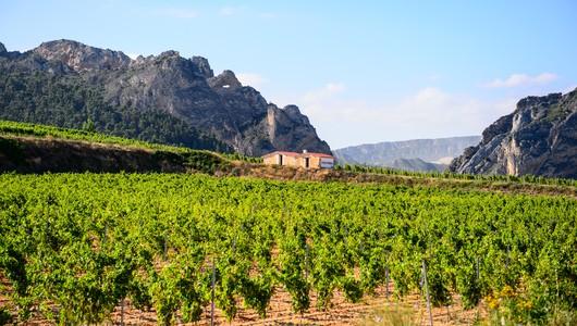 Rioja Wine Tours Bodegas Bilbainas