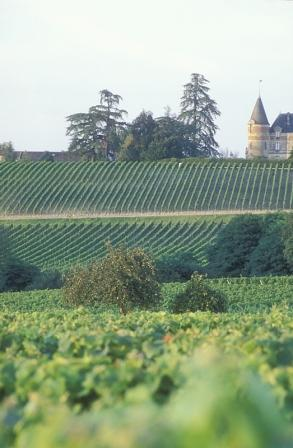 Bordeaux Winery Tour- J J Le Fur