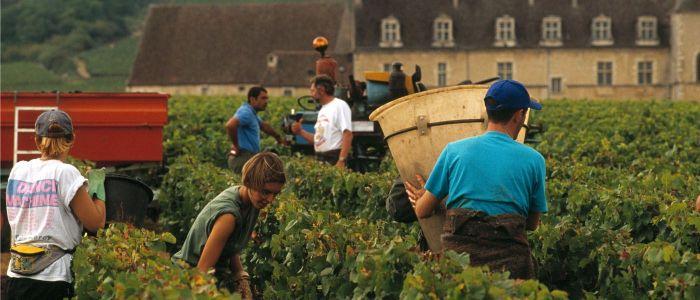 Beaune Wine Tour - Credits A Doire CRT Bourgogne