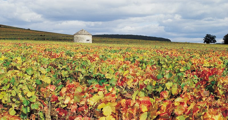 Burgundy Vineyards- Credits Côte-d'Or Tourisme © J-M. SCHWARTZ