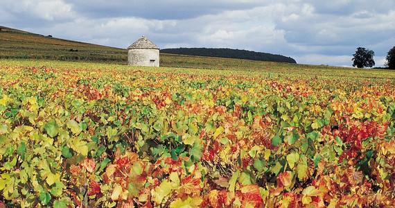 Burgundy Wine Tour- Credits Côte-d'Or Tourisme © J-M. SCHWARTZ