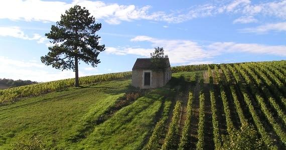 Burgundy area - credits cabane Préhy