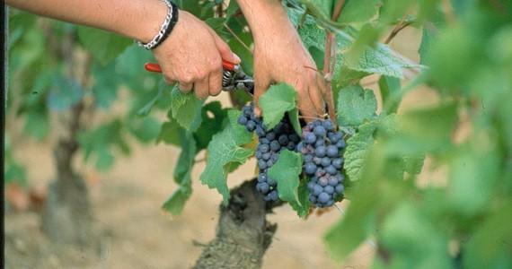 Beaune wine tour
