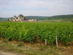 Burgundy wine tour Vineyards