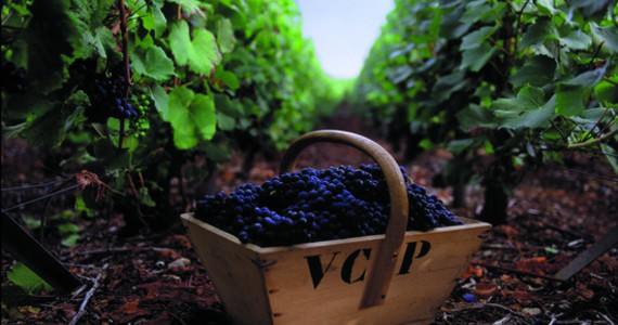 Vineyard tours Credits- Veuve Clicquot