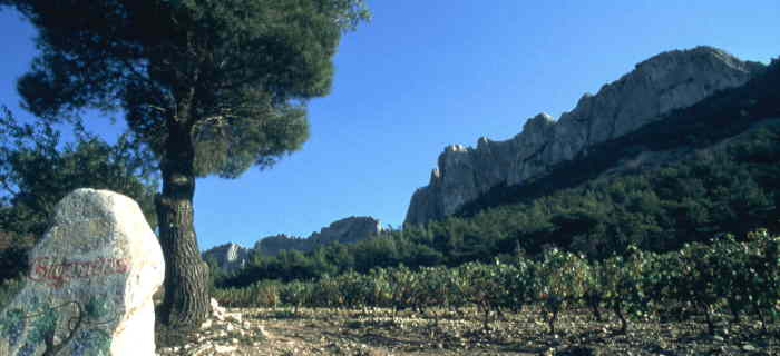 Vineyards in the Dentelles de Montmirail - J THIBHOUT coll CDT84