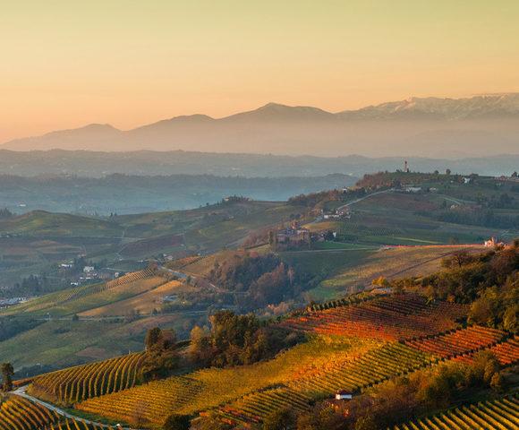 Piedmont Wine Tour