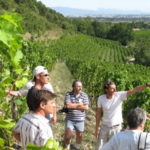 Rhone Wine Tour- Guests in the vineyards in the northern Rhone