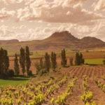 Rioja wine tour - Vineyards- Rioja Tourisme