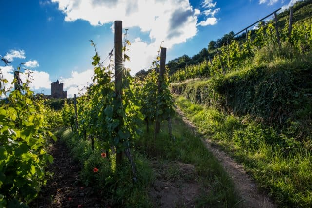 Riquewihr wine tour - Credits Meyer and ADT Alsace