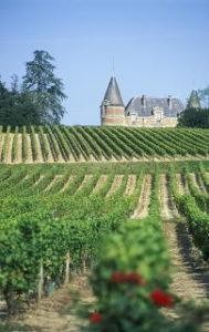 Bordeaux wine tasting - B.P. Lamarque