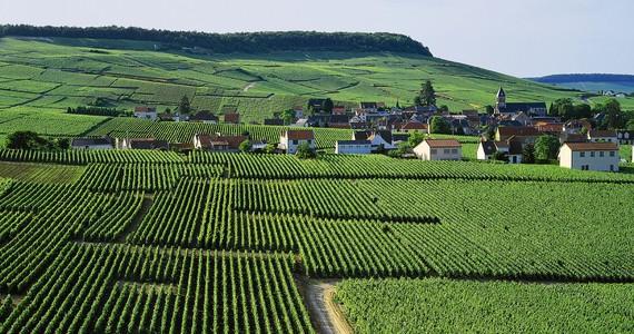 Epernay vineyard tour ©JK Gräber
