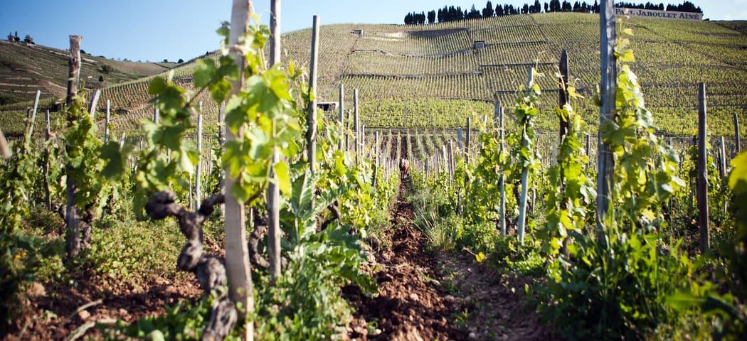 Rhone wine tours - Credits ©Julie Rey – Domaines Paul Jaboulet Aîné