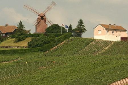 Simply Epernay vineyard tour - Moulin