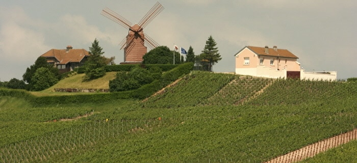 Simply Epernay vineyard tour - Moulin