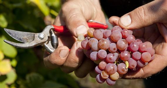 Riquewihr wine tour - Credits DOMCOL