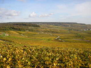 View on a wine tour in Champagne