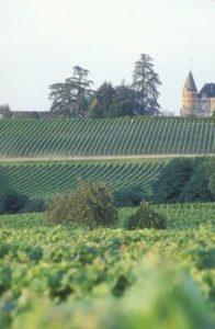 Bordeaux wine tour- J J Le Fur