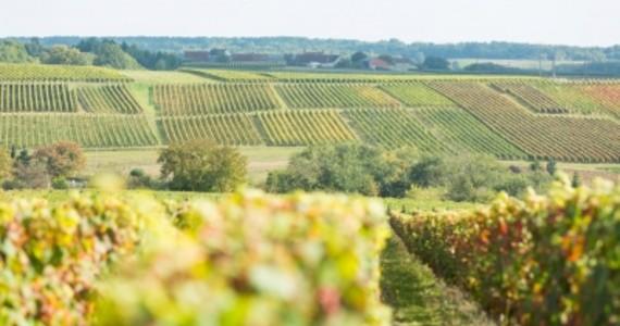 Loire Valley Wine Tours © 2014 - Stevens Frémont - ADT TouraineInterloire