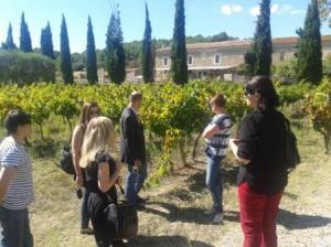 Labguedoc Vineyard Tours