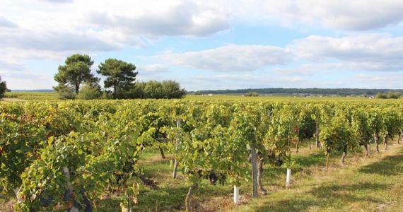 Loire wine tours - credits Nantes Wine Tours
