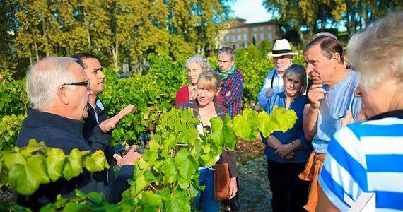 Provence Wine Tour - Credits Provence Vineyards Vendange