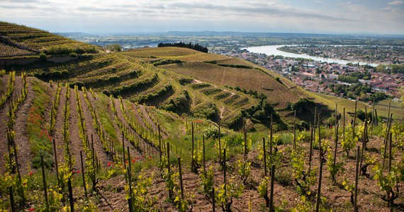 Rhone wine tour - Credits ©Julie Rey – Domaines Paul Jaboulet Aîné