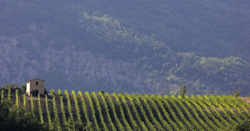 Rhone wine tour - Credits L.PASCALE