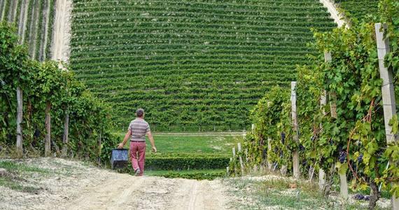 piedmont wine tasting