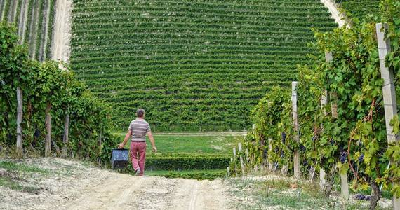 Piedmont wine tours