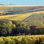 Chablis Wine Tour- Credits Chablis Vititours