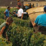 Luxury Burgundy tour- Credits A Doire CRT Bourgogne