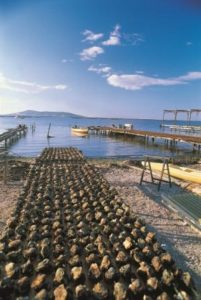 languedoc tours -oysters