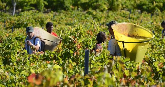 Languedoc Wine - Credits Chateau de Cabezac