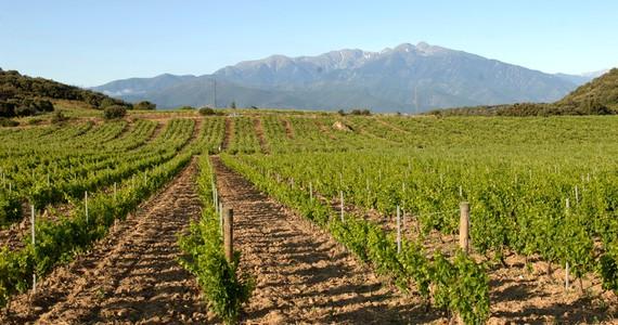 Languedoc holidays - Credits Riberach