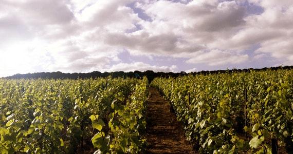 Champagne Battlefields Tour - Credits Taittinger Vineyards 2015 (41)