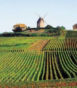Mumm's windmill above the Champagne vineyards at Verzenay