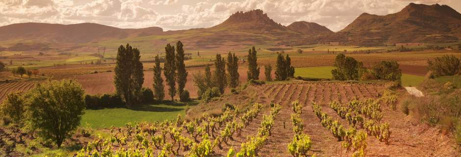 View across the vineyards of Rioja on a Grape Escapes wine tour