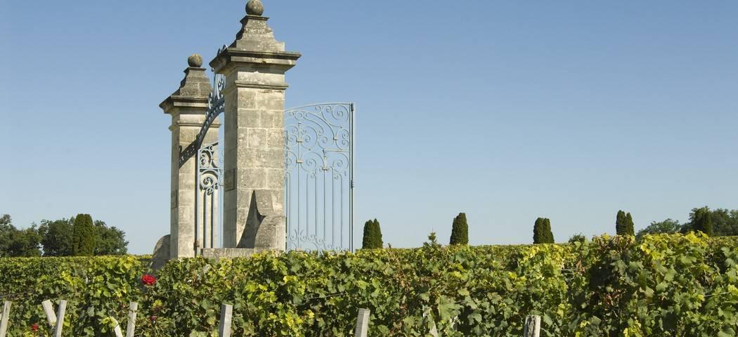 St Emilion Vineyards- Credits Anne Lanta