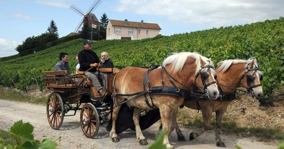 Reims Day Tour © Attelages de Verzenay