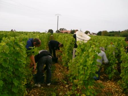 Simply Epernay vineyard tour