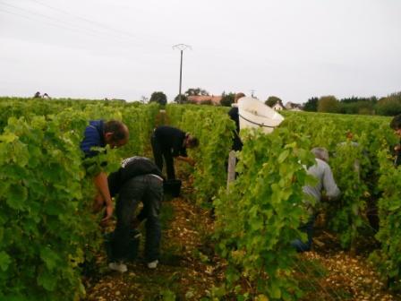 Bordeaux Winery Tour