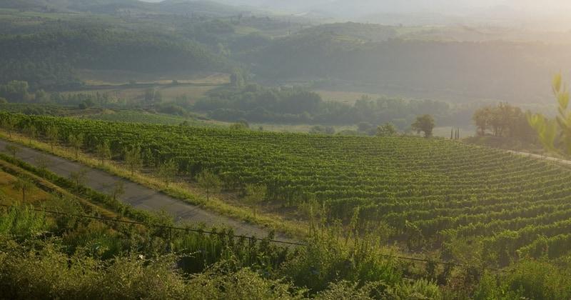 Tuscany Wine Holiday- Credits Fontanelle