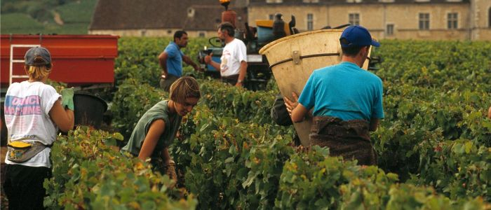 Wine Holiday Ideas- Credits A Doire CRT Bourgogne