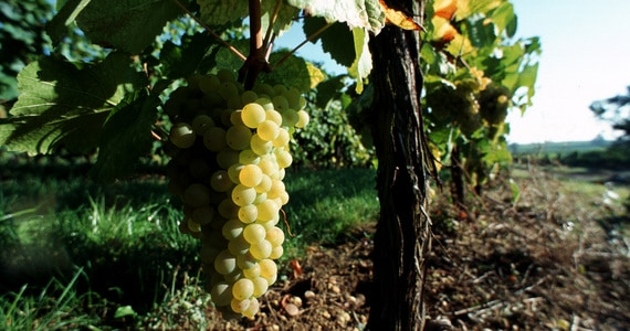 Ultimate French wine tour- Credits Christophe Meyer