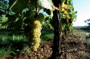 Ultimate French Wine Tour- Christophe MEYER ADT HAUT-RHIN