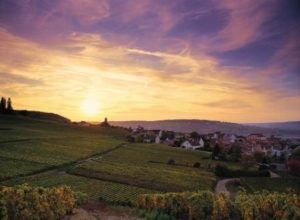 Champagne Tour Champagne Vineyards ©JKGraeber