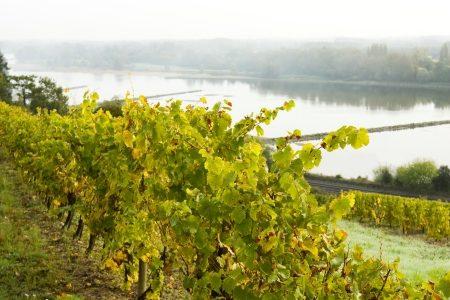 Saumur wine tour- Credits Stevens Frémont